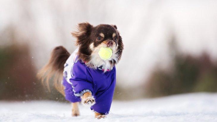 犬が冬を楽しんでいる画像15選