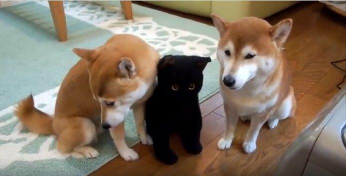 柴犬親子に黒猫さんが仲間入り…?キュートな