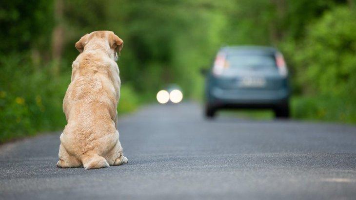 愛犬を手放すとどうなる?犬に起こる2つの悲劇