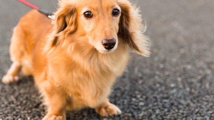 犬が人と人の間に入りたがる4つの心理