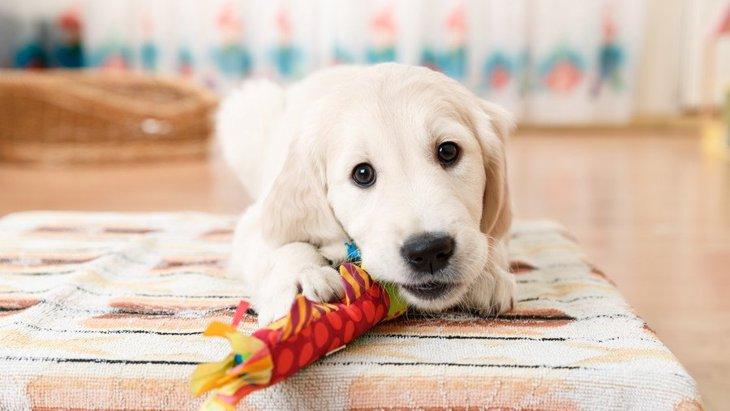犬にとっておもちゃをたくさんカミカミすることのメリット2つ