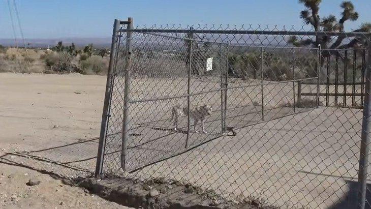 荒涼とした砂漠に捨てられ生き延びた犬に、ハッピーエンドを!