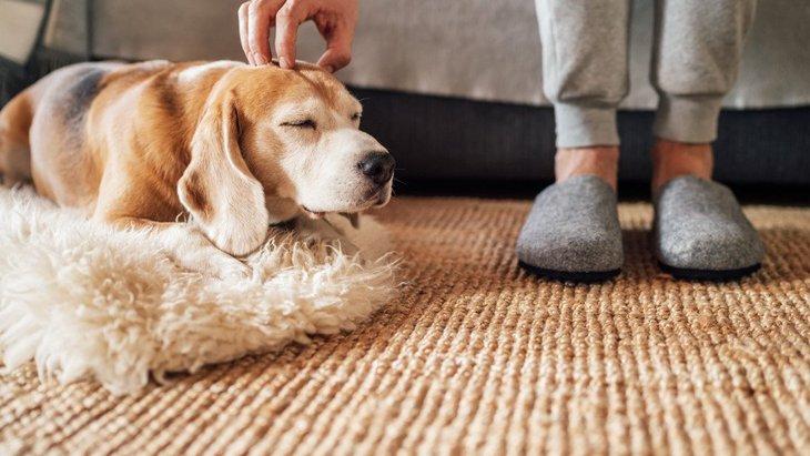 犬が『人を慰めている』時によくする仕草や行動5選