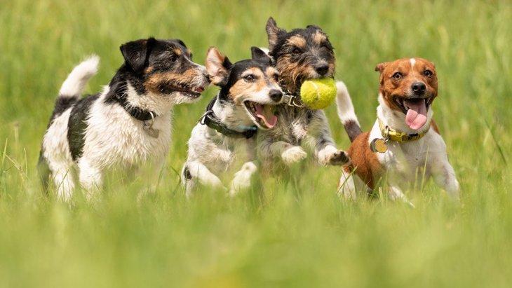 犬同士も助け合うことはあるの?