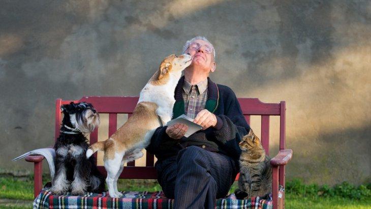 犬が見せる「好きな人への態度」と「嫌いな人への態度」