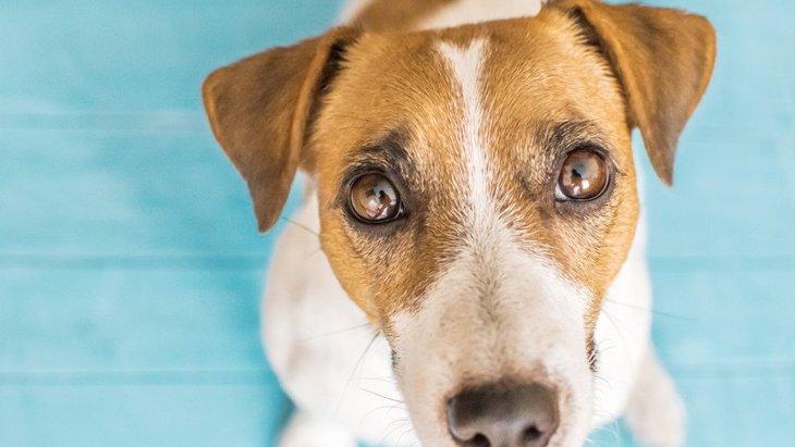 犬の目やにができるのはなぜ?考えられる原因と対処法