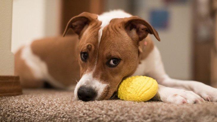 犬の『やきもちサイン』4つ