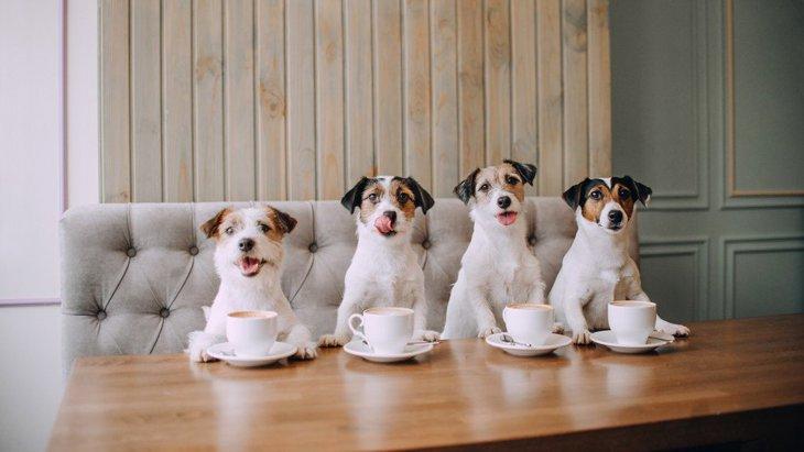 犬も入れる飲食店で絶対してはいけないNG行為5選!正しいマナーで迷惑をかけないように!