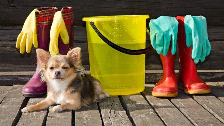 犬がいてもきれいな部屋は作れる?4つのアイディア