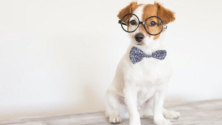 犬を『アクセサリー』だと勘違いしている飼い主のNG行為2つ