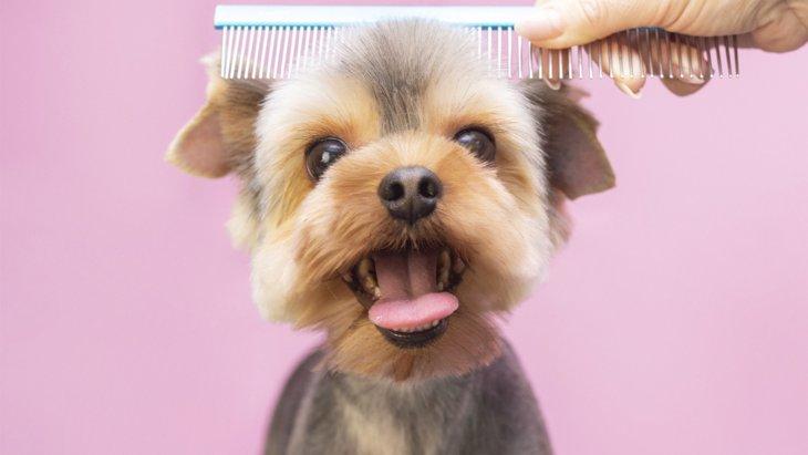 犬のブラッシングの最適な頻度は?被毛への効果と上手に行うコツ