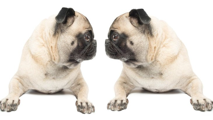 『犬が苦手な犬』もいる?仲良くなってもらうための方法3選