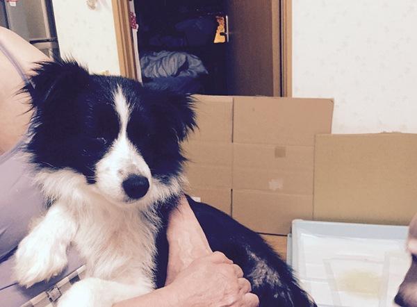 保護犬などのトイレトレーニングができていない成犬のための、トイレの場所選びについて