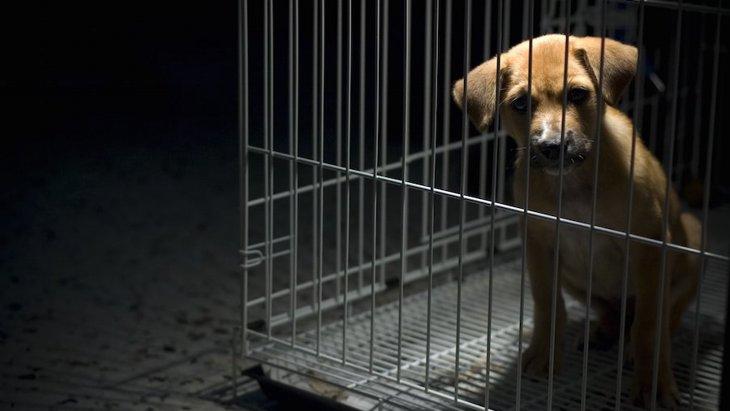 スコットランドが開始した「子犬を安全に購入しよう」キャンペーン