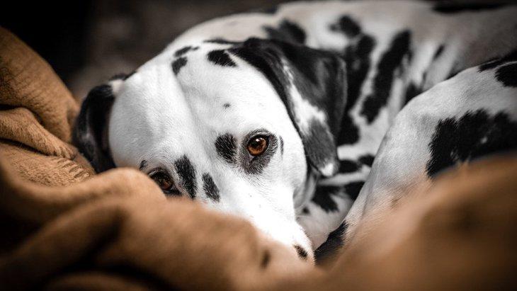 犬が飼い主に寄り添ってくる心理6つ