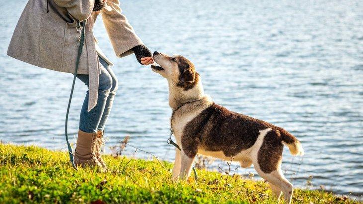 犬が『散歩嫌い』になってしまうNG行為3選!予防法や克服する方法まで解説
