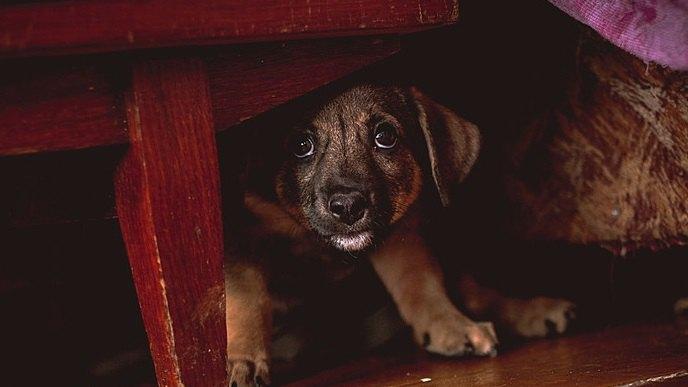 犬が飼い主から隠れたがる時の理由4つ!もしかしたら嫌われているの?