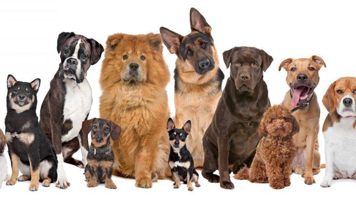 犬の危険な『座り方』3選!もしかしたら病気になっているかも…?