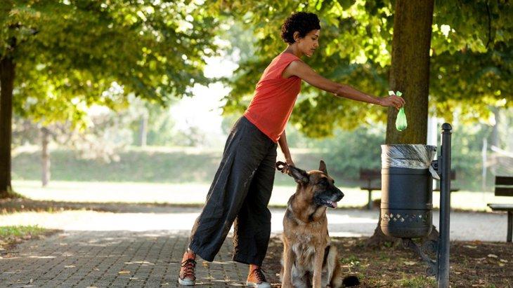 犬のウンチの量はどのくらいがベスト?多いのと少ないのどっちが良いの?