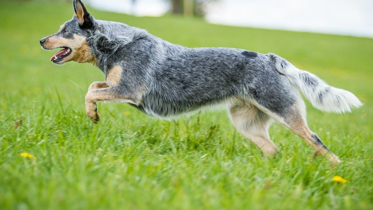 『長生きする犬』の特徴4選!犬種や生活の質で寿命が変わるって本当?