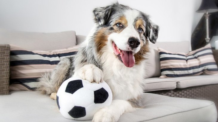 犬とボールを使った遊び方5つ