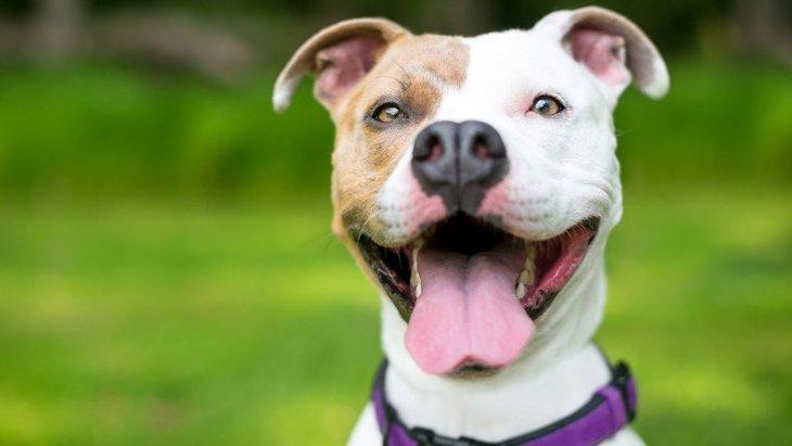 笑顔だけど笑顔じゃない?!犬の「ストレススマイル」とは?