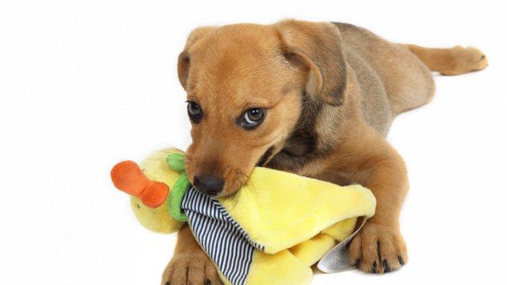 愛犬の「唸り」をやめさせたい!唸りの原因としつけ方法をご紹介
