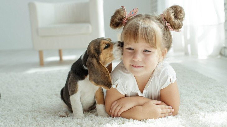 犬が人のニオイを嗅ぎまくる心理3選!犬は何を考えて飼い主を嗅いでいるの?