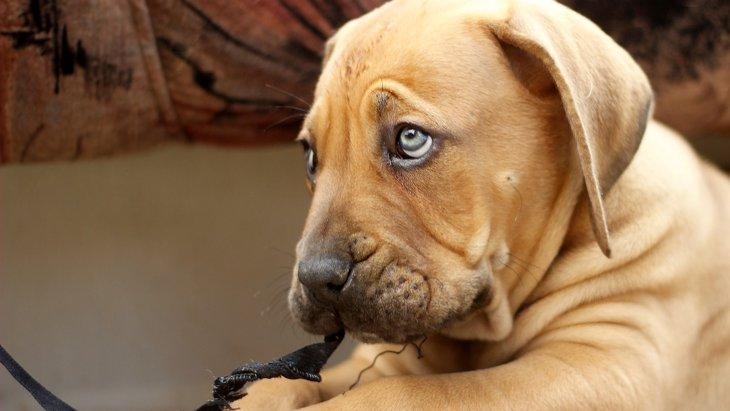 【オシャレには鈍感?】犬はボーダーやストライプが苦手らしい