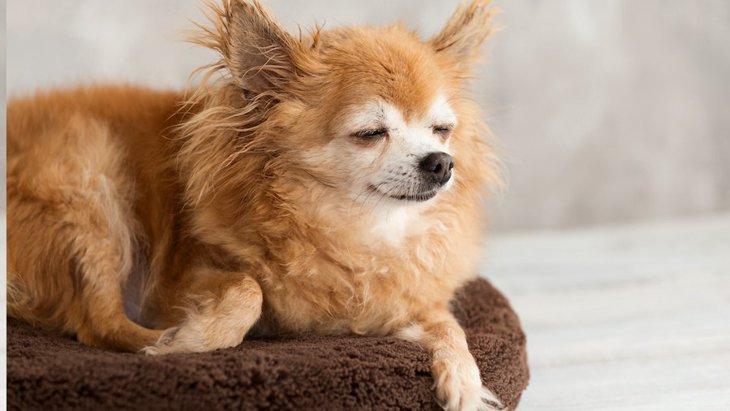 成犬とシニア犬の行動の違い4つ