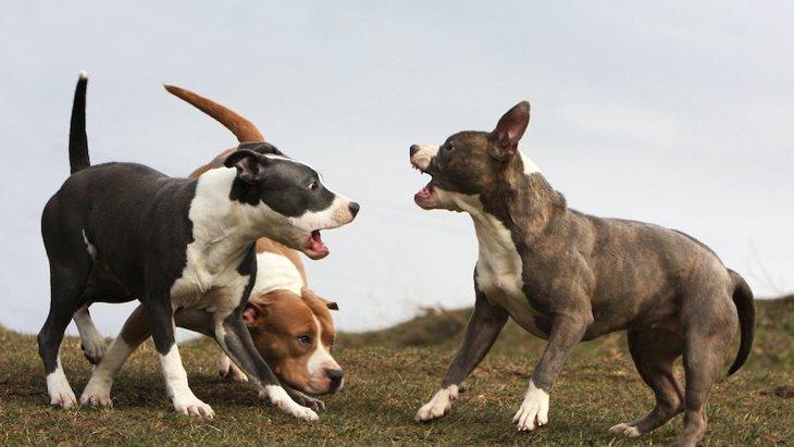 犬同士が喧嘩をしてしまう主な原因3選!やめさせるための正しい方法とは?