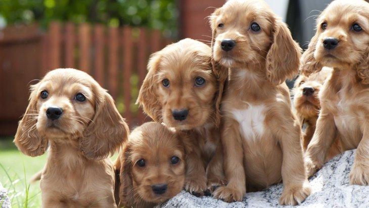 英国発の「最も甘やかされている犬種ランキング」と浮かび上がる疑問