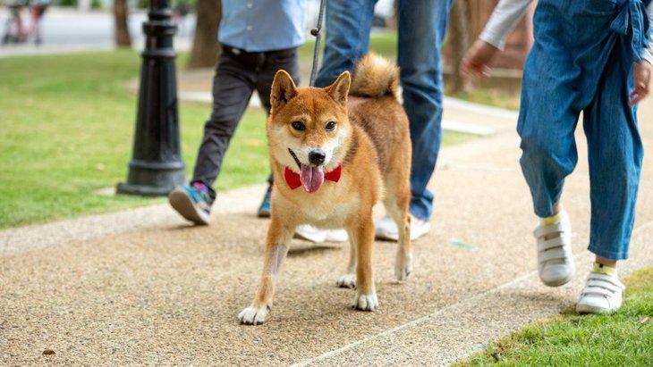 犬が『ゆっくりと歩く』ときの気持ちとは?4つの心理と注意点