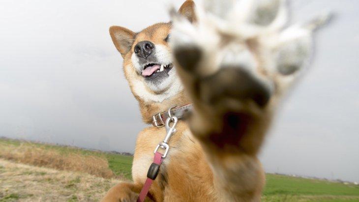 犬の肉球の乾燥ってどうしたらいいの?
