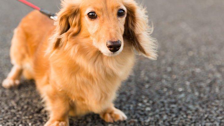 犬の肉球が火傷する?夏の散歩で知っておきたい対策