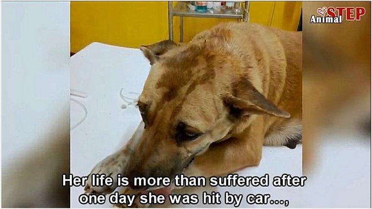 飼い主死亡でホームレスになった犬が交通事故に…それをきっかけに彼女に劇的変化が!