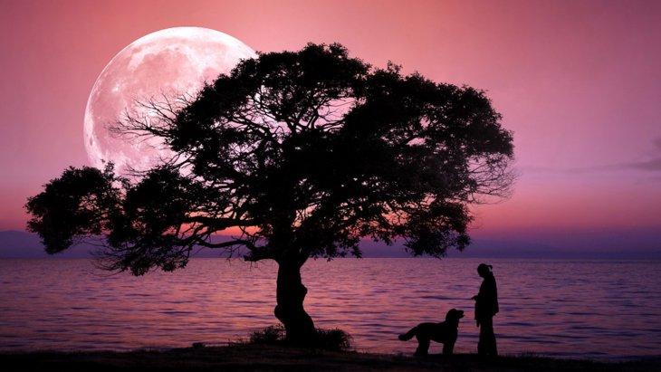 月の満ち欠けが産まれて来る子犬の性別に影響しているという研究結果