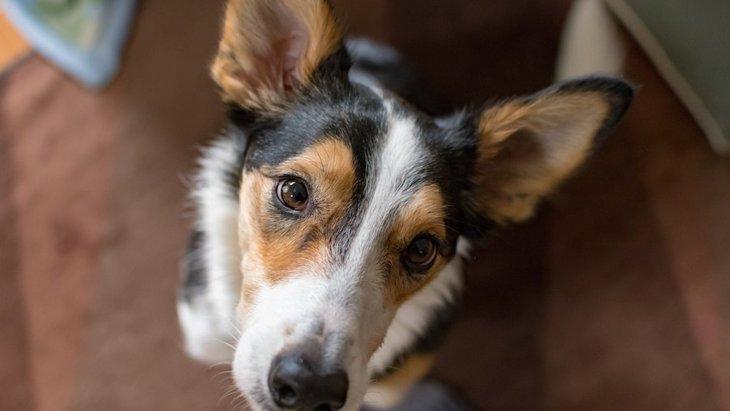 犬に勘違いされてしまう『意外な行為』とは?