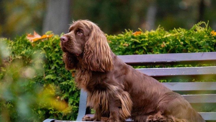 『短足な犬種』5選!てちてち歩く姿が可愛すぎる♡