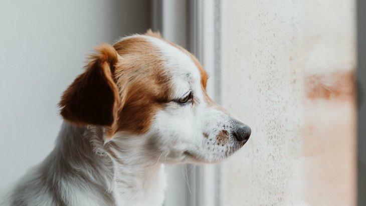 犬がしょんぼりしている時の心理5つ