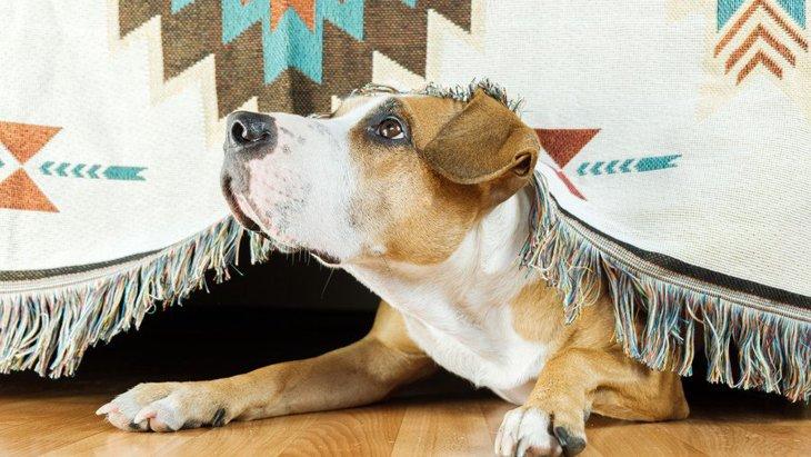 犬がテーブルやイスの下に潜る時の心理5選