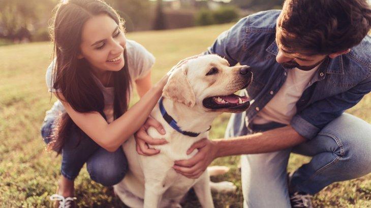 犬が『男嫌い』『女嫌い』になる理由とやりたい対策