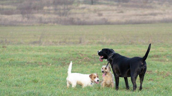 大型犬と小型犬の多頭飼いで注意すること
