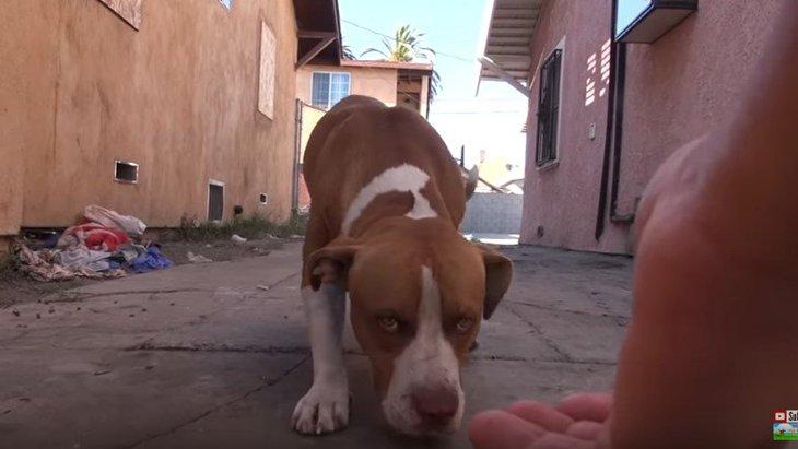 火事を生き延びた後、捨てられた犬。保護して今度こそ幸せに。