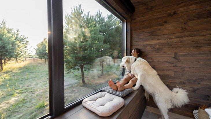 コロナ禍中の愛犬の行動に関する国際的なアンケート調査結果