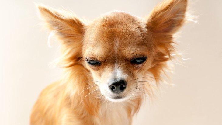 犬の機嫌が悪い時にしてはいけないNG行為3つ
