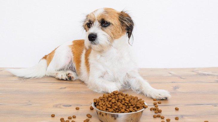 犬は炭水化物を消化しづらいって本当?