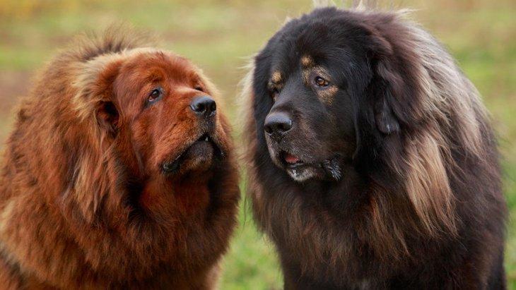 世界で取引されている『超高額犬』10選!数億円の値が付けられる犬種も…?