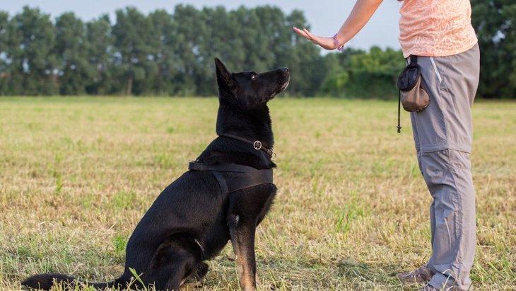 愛犬と一緒に資格にチャレンジ!「コンパニオン・ドッグ」「家庭犬訓練試験」とは?