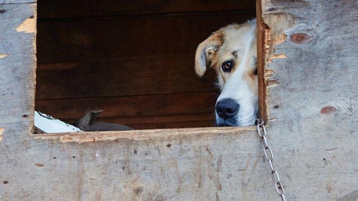 犬を外で飼うべきではない理由4選!室内で飼う方が寿命が長くなるって本当?